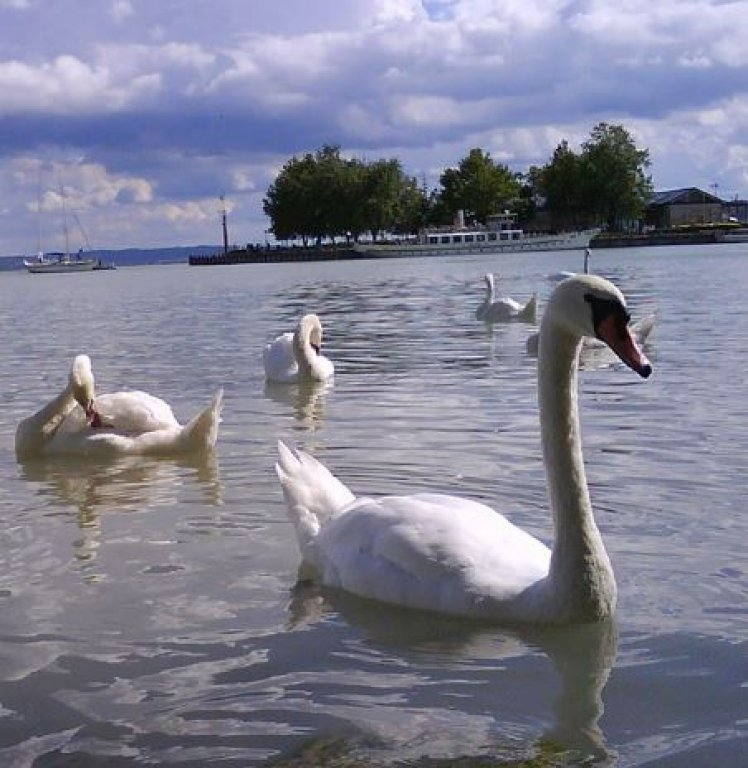 General Lake Balaton & Herend Tour